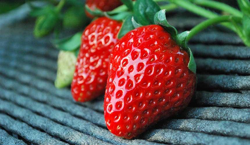 觀光果園採草莓吃到飽吉次園