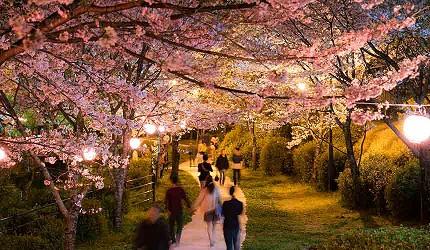 菊池公園是賞櫻名所