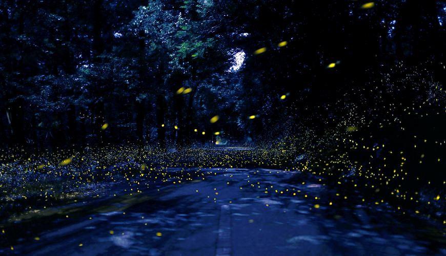 到熊本「菊池」親近大自然!3000株櫻花林與螢火蟲棲息的世外桃源
