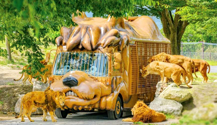 九州必排親子行程:超刺激!到「九州自然動物公園」近距離餵食獅子大象