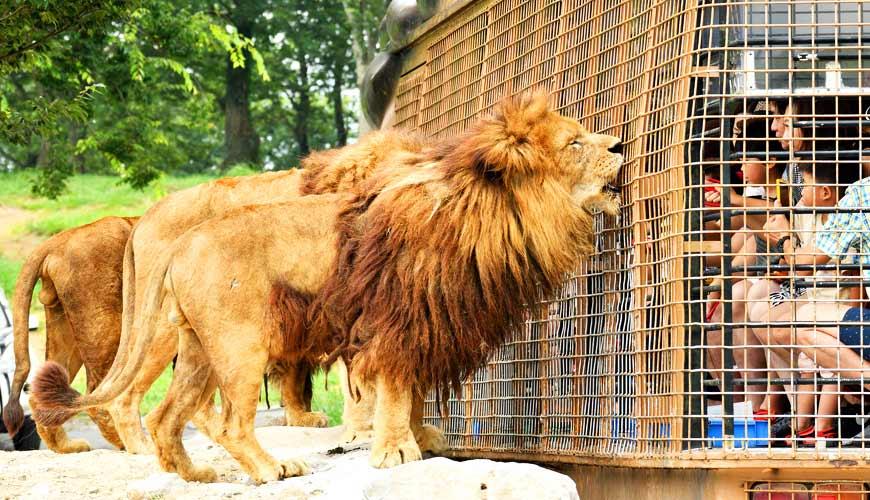 九州自然動物公園的叢林巴士