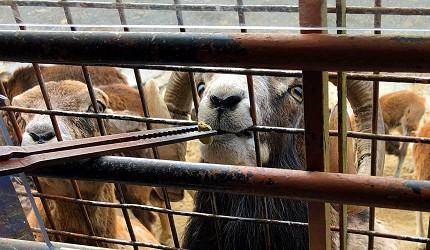 九州自然動物公園餵食體驗