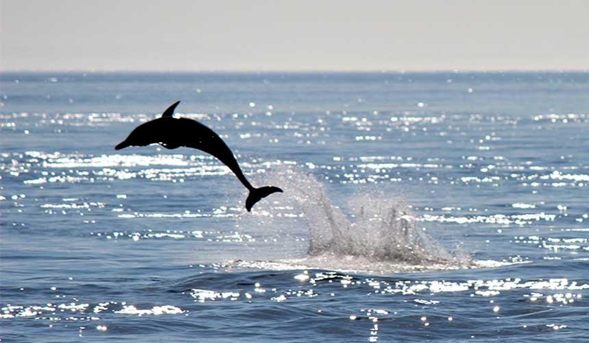 搭船賞海豚體驗