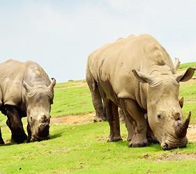 九州自然動物公園大型動物