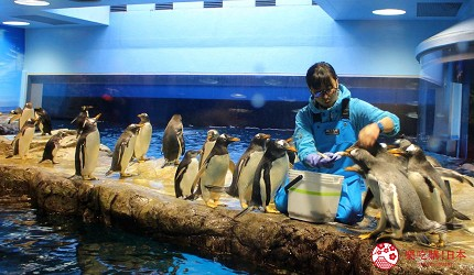 日本福岡「小倉」出發的門司港、下關市美食懷舊之旅的下關市內的「海響館」的企鵝