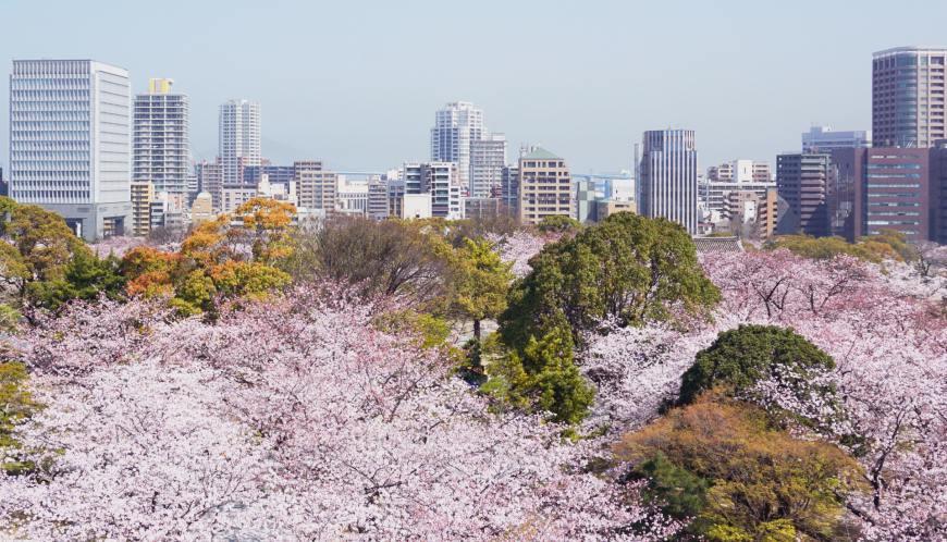 九州自由行赏樱九州樱花景点推荐