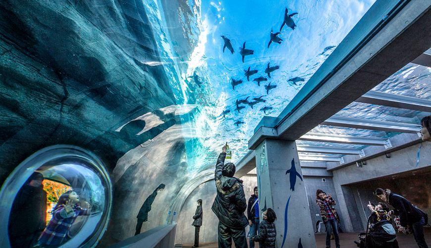長崎佐世保景點推薦九十九島動植物園森きらら的企鵝館