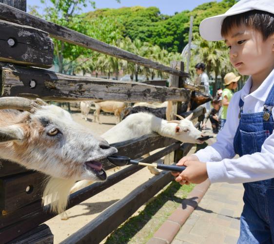 長崎佐世保景點推薦九十九島動植物園森きらら餵食動物體驗