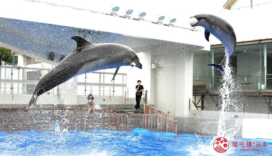 長崎佐世保景點推薦九十九島水族館海きらら的海豚