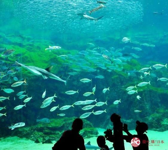 長崎佐世保景點推薦九十九島水族館海きらら館內