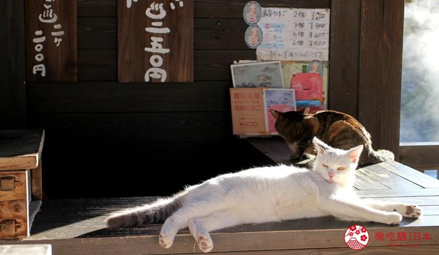 日本九州自由行推薦長崎島原、雲仙的雲仙地獄的白貓