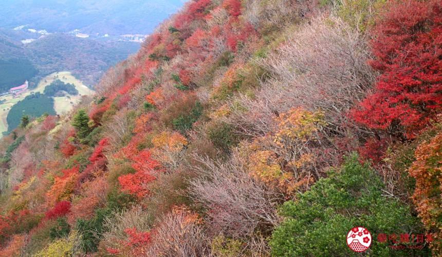 日本九州自由行推薦長崎島原、雲仙的仁田峠的滿山紅楓