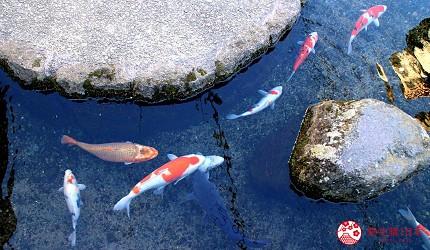 日本九州自由行推薦長崎島原、雲仙的新町的鯉魚街