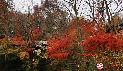 由布院溫泉住宿推薦おやど二本の葦束秋季楓紅